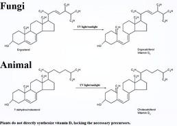 buy periactin without prescription